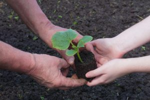 A seedling being passed from old hands to young hands to represent farm succession planning