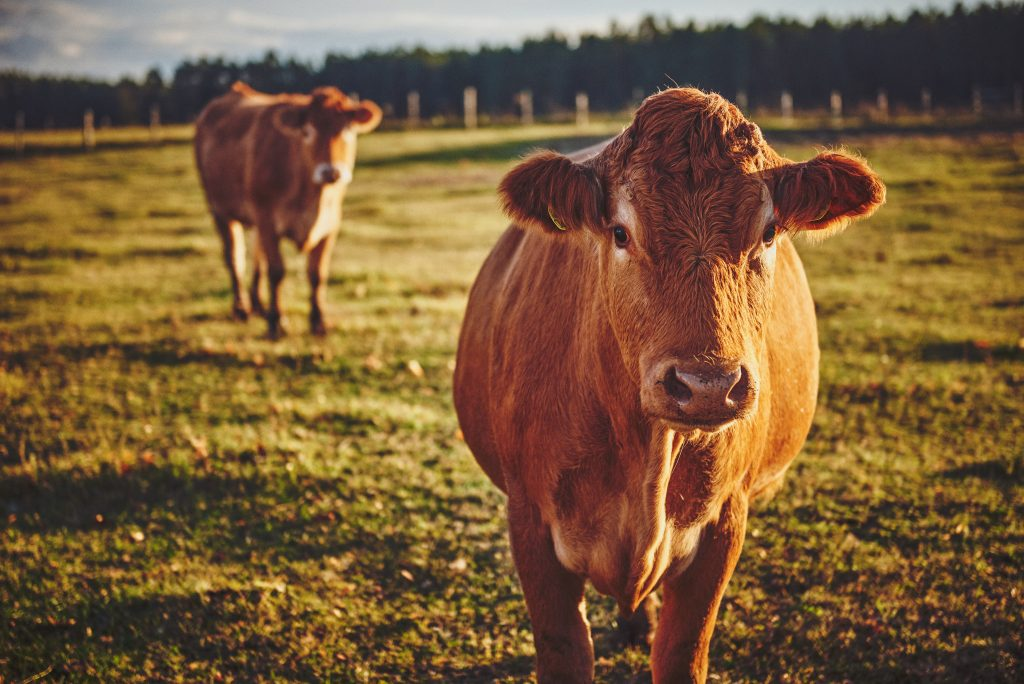 What is regenerative farming event image