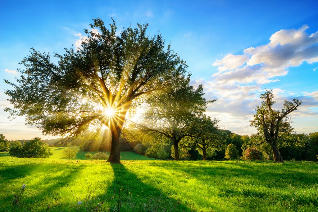 How will the changes in farm payment schemes affect you blog image.  Tree with sun shining through.